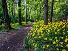 forest-flowers-234917.jpg (1920×1440)