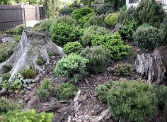 Сад Войтеха Голубца всегда удивляет. Таксильно он отличается от других чешских садов! Хотя емуприсущи все их лучшие черты.