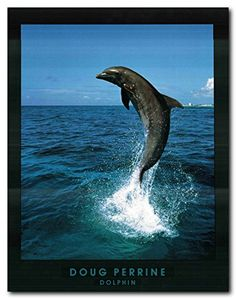 Doug Perrine Dolphin Jumping Ocean Wall Decor Art Print P...…