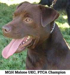 MQH Patterdale Terriers