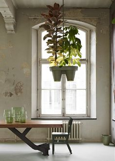 ^*+Plants & Interior Design: Botanic Bucket Light, Dutch Designer Roderick Vos - Go Green with the Remarkable Plant Lamp: Botanic Bucket Light. With Handy Plugin for your Electronic Devices! The Sicilian Table, from Roderick Vos' Linteloo Collection! Bucket Light, Plant Lighting, Hanging Plants, Hanging Baskets, Potted Plants, Indoor Plants, Tropical Plants, Ceiling Lamp, Decoration