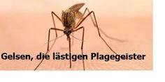 Wenn ein Gelsenstich oder Insektenstich einmal passiert ist Insects, Insect Bites, Middle, Tips And Tricks, Life