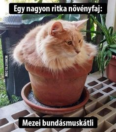 20 Cute Cat-Plants You Shouldn't Water Silly Cats, Crazy Cats, Cats And Kittens, Funny Cats, Pet Cats, Chatons Oranges, Animals And Pets, Cute Animals, Funny Poses