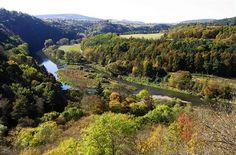 Barvy podzimu jsou nejkrásnější v listnatých a smíšených lesích. Výlet na Křivoklátsko, kde se v pestré paletě střídají duby, buky, modříny, smrky i tisy, je proto nasnadě. Zavedeme vás do nejzajímavějších míst této jedinečné středočeské krajiny. Tours, River, Outdoor, Outdoors, Outdoor Games, The Great Outdoors, Rivers