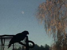 Emmy at Moonrise