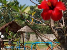 Kids playground Beach Hotels, Rhodes, Bird Feeders, Playground, Outdoor Decor, Kids, Home Decor, Children Playground, Young Children