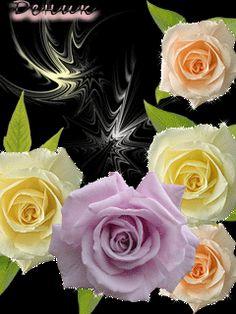 Розовый микс Beautiful Gif, Beautiful Roses, Gifs, Save Link, I Wallpaper, Butterflies, Phones, Night, Floral