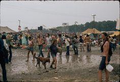 Twilight of innocence: Summer Jam at Watkins Glen, 40 years ago this week. Summer Jam, Allman Brothers, Watkins Glen, Rock Festivals, Bad Memories, Rock Concert, Woodstock, 40 Years, Twilight
