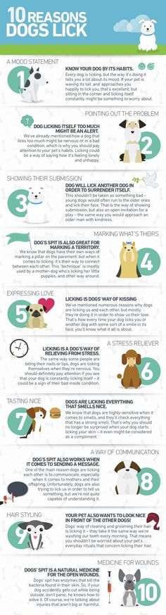 | cute puppies and dog training tips by KaufmannsPuppyTraining.com