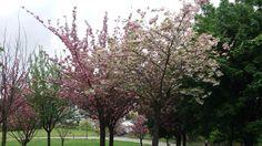 El parque de Etxebarria se viste de primavera - Bilbao
