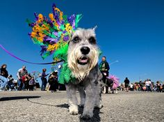 #galvestoncom  Don't you love Mardi Gras! Galveston?