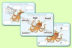 OCTOPUS BODY PARTS - POSTER & WRITING SHEETS    Pack includes 3 pages: poster for display and modelling, version with blank labels for writing, plus a writing template with initial sounds for labels. PLUS more FREE 'Under The Sea' themed printable resources on this page! We hope they help! Eyfs Activities, Literacy Games, Nursery Practitioner, Alphabet Display, Early Years Teacher, Role Play Areas, Writing Template, Initial Sounds, Display Banners