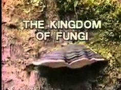 5 Kingdoms of Living Things (C1, W2)