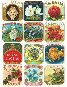Free Printable Public Domain Antique Floral Cigar Box Labels-vintage, public domain, graphics, illustrations, flower, floral, photoshop, com...