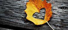 Fall Colorado facebook cover photo - Google Search