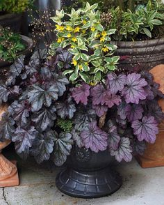 Eye Catching Container Gardens from British Columbia Stunning container designs from Western Canada Garden Trellis, Garden Planters, Indoor Garden, Container Gardening Vegetables, Container Plants, Micro Garden, Container Design, Heuchera, Easy Garden