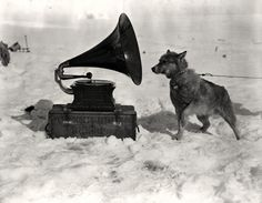Herbert Ponting. Sled dog (Chris), listening to the gramophone, Antarctica (South Pole), c. 1911· Magic Transistor