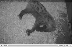 Live dieren kijken in DierenPark Amersfoort