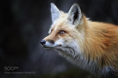 Windows To The Soul by mlorenz #animals #animal #pet #pets #animales #animallovers #photooftheday #amazing #picoftheday