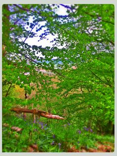Woodland walk #Durham #Woods #Bluebells #Beauty #Nature Durham, Woodland, Woods, Sweet Home, Fruit, Nature, Beauty, Naturaleza, House Beautiful