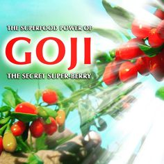 Goji berries contain an extraordinary amount of unique nutrients and anti-oxidants that give them amazing power as a superfood in our diets.  Blog Post: http://drjockers.com/the-superfood-power-of-goji-berries/  #Goji #Berries #Berry #Antioxidants #Anti #Oxidant #Power #SuperFood #Nutrient #Doctor #Jockers