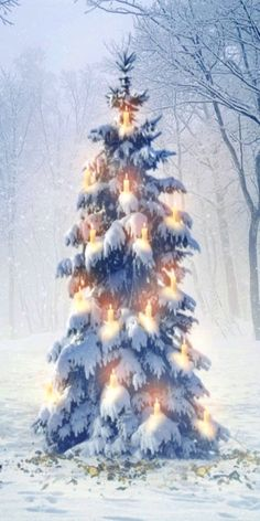 Yule Tree In the Woods