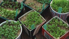 Garden Articles (starting vegetable seeds indoors)
