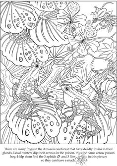 √ Hunting Coloring Pages . 7 Hunting Coloring Pages . Awesome Image Of Hunting Coloring Pages Frog Coloring Pages, Colouring Pics, Animal Coloring Pages, Printable Coloring Pages, Free Coloring, Coloring Sheets, Coloring Books, Colorful Drawings, Colorful Pictures