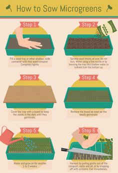 Microgreens: How to Sow Microgreens