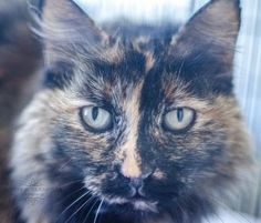 Charlotte was adopted on 6/6/15!