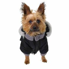 Pocket Dog Parka by Dogo - Black