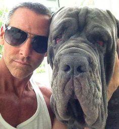 Two Year Old Mastiff Dies On United Airlines Flight | VITAFUNNY