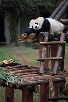 Panda by Lauri Väin, via Flickr