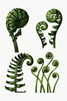 Abstract Nature, Abstract Images, Fern Plant, Plant Leaves, Brainstorm, Ostrich Fern, Fern Tattoo, Spring Forest, Leaf Illustration