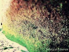 by Selecca Lauren