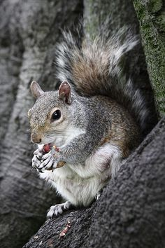 Squirrel.....January 21st is Squirrel Appreciation Day...