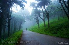 Outros/Caminha por entre o nevoeiro