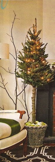 tree - great stylish option for small spaces - eliminate the wide bottom branches