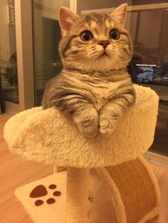 Cute Baby Cats, Cute Cats And Kittens, Cute Little Animals, Cute Funny Animals, Cool Cats, Kittens Cutest, Funny Cats, Cute Babies, Pretty Cats