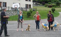 05/11/13. FAVERGES (74). IME Guy Yver : Handi'chiens en visite.Les jeunes gens et l'équipe de l'IME Guy Yver de Faverges ont reçu les formateurs et… les chiens d'Handi'chiens. Cette association éduque et offre des chiens d'assistance à des personnes en situation de handicap.  http://www.ove.asso.fr/actualites/details/93-ime-guy-yver--handichiens-en-visite
