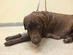 Mother dog shot twice in the head and left for dead in Utah