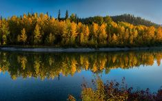 Download wallpapers Glacier National Park, river, forest, autumn, yellow trees, autumn landscape, USA