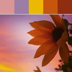 Sunflower Dusk Palette ⚜️⚜️ PALETTE MUSINGS - Sunsets 〰️  (FCS)
