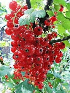 Image result for fruits plants and water drops