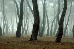 Hwang Sung Park in Gyeongju historic city  경주 황성공원 숲        forest      misty      gyeongju      © Twostar K