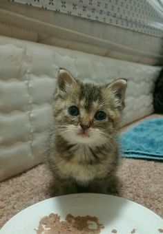 Couple Woke Up to Loudest Meows from a Teeny Stray Kitten Asking for Help, Now a Few Months Later...