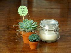 Flowers of Soul: Plante suculente