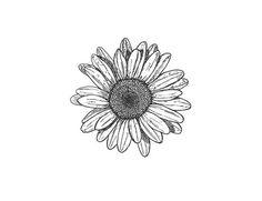 daisy chain drawing - Google-Suche