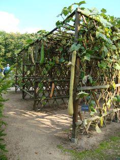 >An update on the rustic garden. - All About Gardens Small Backyard Gardens, Outdoor Gardens, Fall Crops, Rustic Landscaping, Garden Arbor, Garden Structures, Outdoor Structures, Garden Images, Rustic Gardens