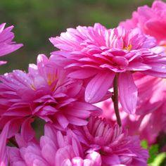 The 66 best flowers hd images on pinterest plants beautiful beautiful flowers hd wallpapers mightylinksfo